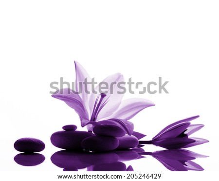 freshness white lily with  bud and l white stones on white reflection background