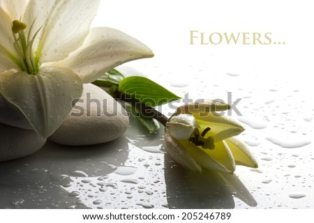freshness white lily with  bud and  white stone on white background - stock photo
