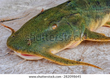 Freshwater fish species in the north of Thailand - stock photo