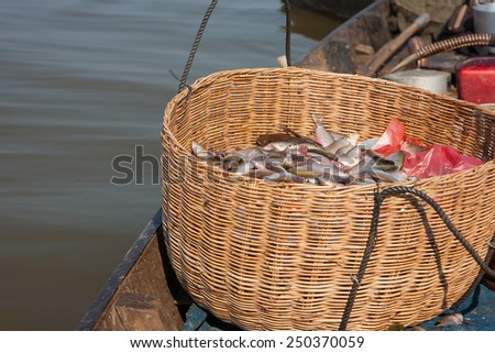 freshwater fishes in basket caught by local fisherman at cambodia - stock photo