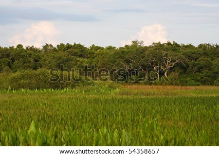 Freshwater Marsh in the Everglades, Big Cypress National Preserve - stock photo