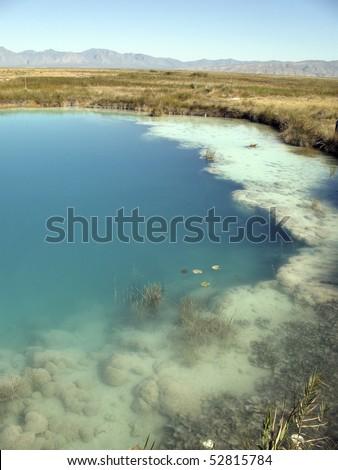 Freshwater Stromatolite Reef in Cuatro Cienegas, Coahuila Mexico - stock photo