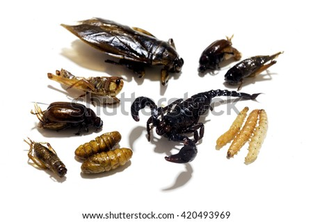 Fried edible insects on a white background