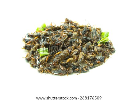 Fried insect on White background - stock photo
