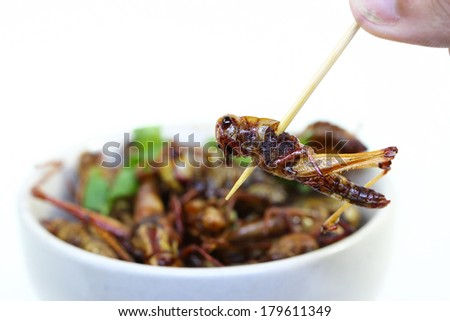 Fried insects. - stock photo