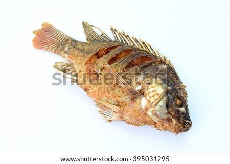 Fried Tilapia fish fried isolated on white background - stock photo