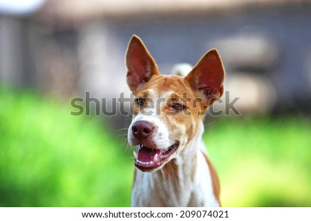 Friendly dog out for a walk - stock photo