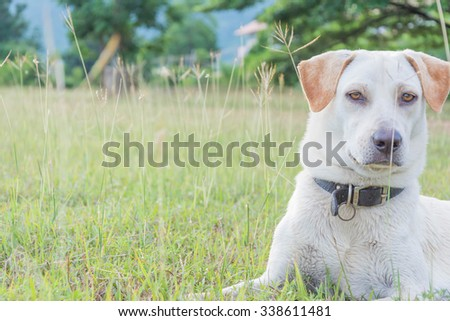 friendly puppy dog sitting on the Meadow