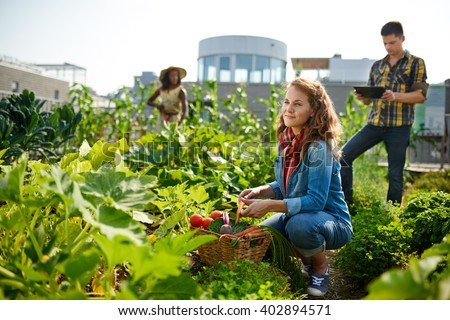 Friendly team harvesting fresh vegetables from the rooftop greenhouse garden and planning harvest season on a digital tablet - stock photo