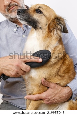 Friends forever: man brushing his lovely dog - stock photo