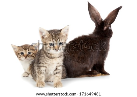 Friendship animals and pets kitten and rabbit in studio isolated on