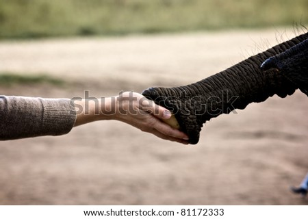 Friendship between animal an man, elephant and lady - stock photo