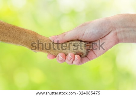 Friendship between human and dog - shaking hand and paw - stock photo