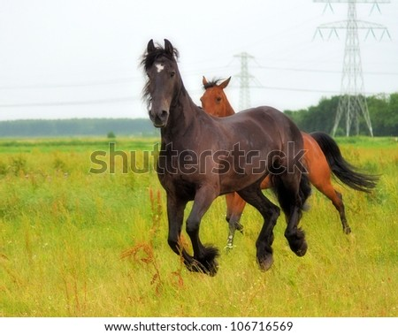 Friesian running with racehorse besides him - stock photo
