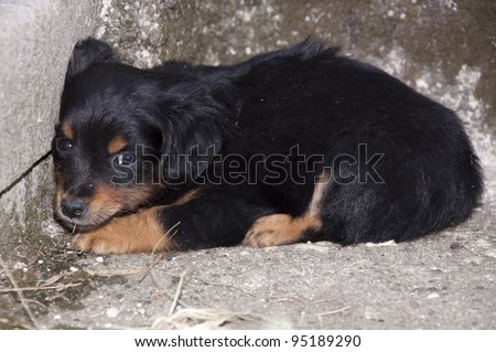 Frightened Abandoned Puppy Lying in the Corner - stock photo