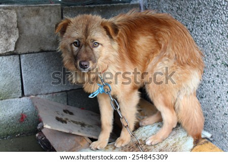 Frightened cute dog, China - stock photo