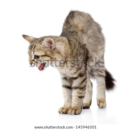 Frightened kitten. Isolated on white background. looking away  - stock photo