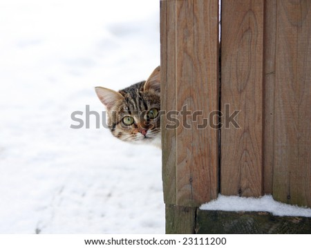 Frightened kitten looks out over the fence.