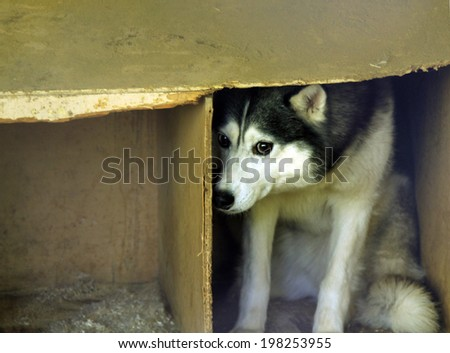 frightened stray dog - stock photo