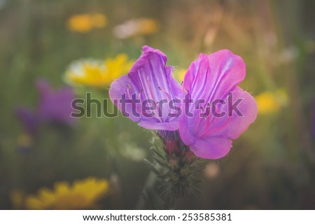 Fringed Gentian plant flower zoomed and with the light leak, beautiful wildflower picture - stock photo