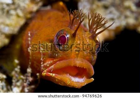 Ugly fish stock images royalty free images vectors for Deep sea fishing santa cruz