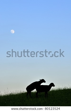 Frisky sheep silhouette under full moon, family farm, Webster County, West Virginia, USA - stock photo