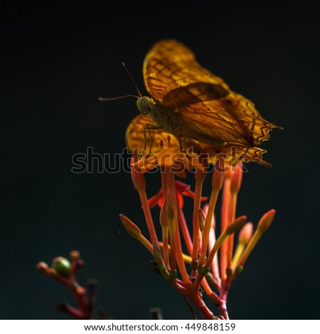 Fritillary yellow Butterflie on a flowers in sunlight - stock photo