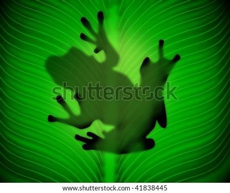 frog, - stock photo