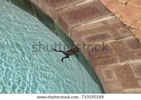 how to keep frogs out of swimming pool