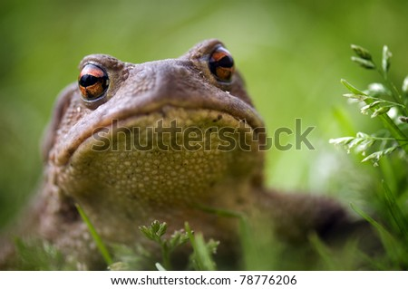 Frog, close up view, on green grass background - stock photo