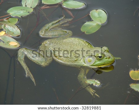 Frog hanging out in a pond