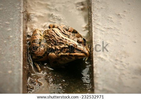 frog hiding the rain - stock photo