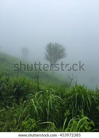 Frog Hill and big tree - stock photo