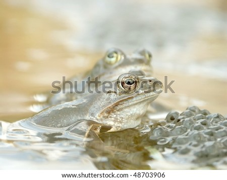 Frog in a pond near the forest. Photo taken in spring. - stock photo