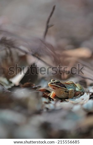 frog in forest - stock photo