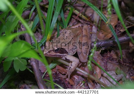 Frog in the Wood - stock photo