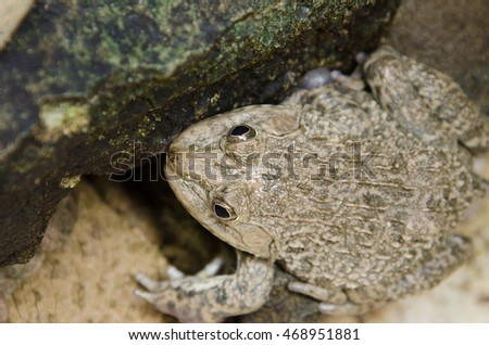 Frog in tropical forest , fauna, resting,
