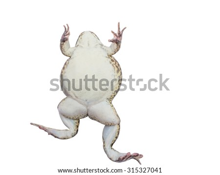 Frog isolate white background with clipping path - stock photo