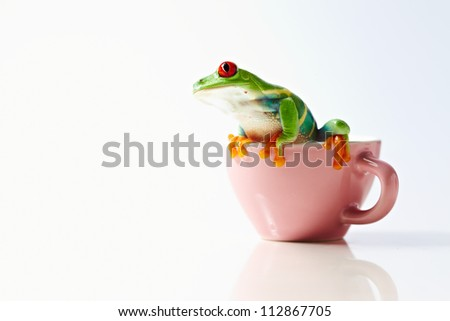 frog isolated on white background - stock photo