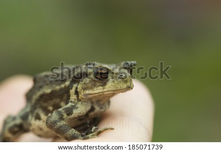 frog jumping from people hand - stock photo