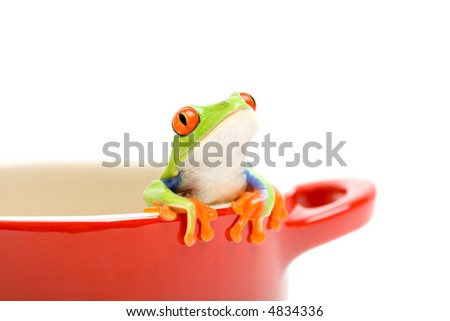 frog looking out of cooking pot for help. a red-eyed tree frog (Agalychnis callidryas), closeup isolated on white - stock photo