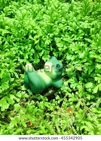 Frog lying in the garden - stock photo
