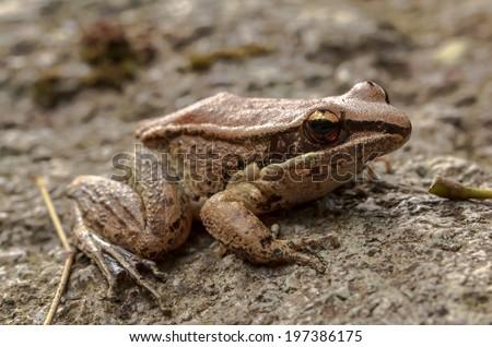 Frog Mountain gray naturally. - stock photo