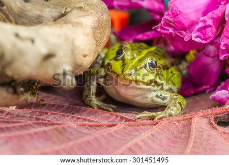 Frog near flowers - stock photo