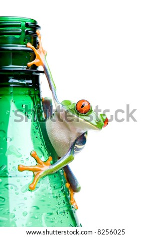 frog on a bottle - a red-eyed tree frog (Agalychnis callidryas) hanging on a wet green water bottle with water droplets, closeup and isolated on white - stock photo