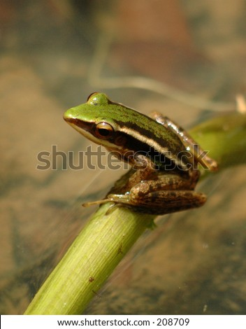 Frog on a branch by a pond