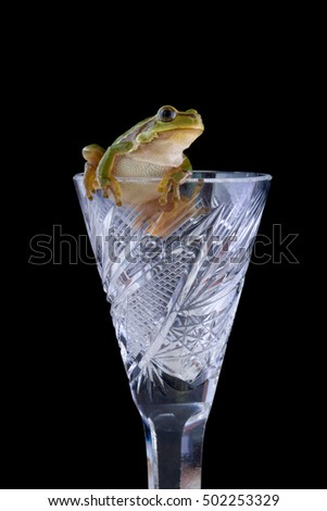 frog on a crystal glass