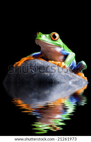 frog on a rock closeup isolated on black - stock photo