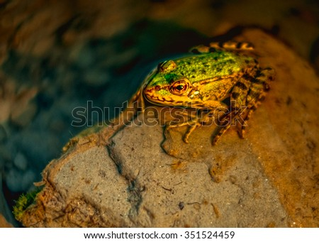 Frog on a rock in the sun - stock photo
