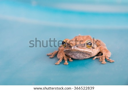 frog on blue water tank